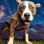 Klimaspacko will Haustiere verbieten