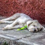 Bad Dürkheim: Angeleinter Hund vor Supermarkt gemessert