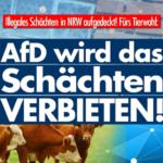 Trotz Hinweisen an die Behörden: Hunderte Tiere in NRW qualvoll geschächtet