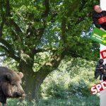 Was kümmert es die deutsche Eiche, wenn sich die Wildsau daran reibt?